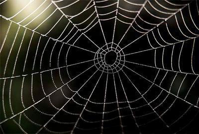 Избавляемся от пауков в доме