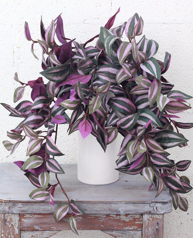Растение для дома Традесканция